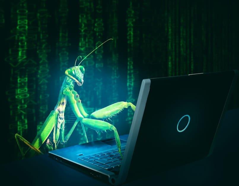 insecto utilizando una laptop