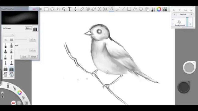 pajaro dibujado programa windows 8